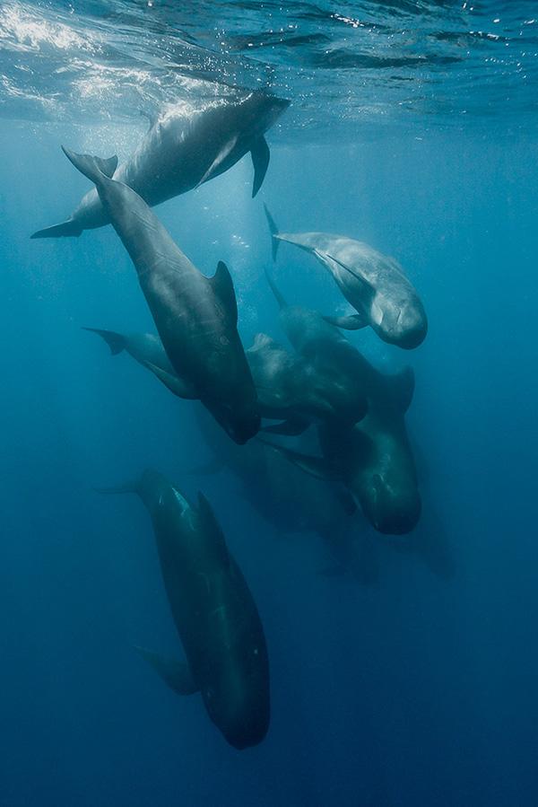 delfinir